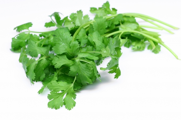 Soft-Coriander-Leaves-Innate-Health-Secrets