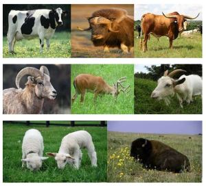 Animals that eat grass and have cloven hoofs
