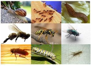 Snails, Ants, Slugs, Bees, Wasp, Fly, Roach, Caterpillar, Centipede
